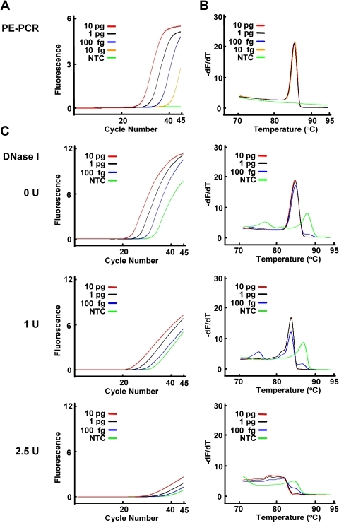 Comparison of broad-range real-time PE-PCR and broad-range real-time PCR with DNase I pretreatment of PCR reagents.A–C. The indicated amounts of S. aureus genomic DNA were subject to broad-range real-time PE-PCR using the fusion probe M13-16S-p201F and the primer set M13 and p1370 in the presence of LCGreen I plus HRM dye (panel A and B). Alternatively, the PCR reaction mixtures with or without pretreatment of DNase I (1 U and 2.5 U) were used for broad-range real-time PCR to amplify the indicated amounts of S. aureus genomic DNA (panel C). The PCR product was subject to HRM analysis using HR-1 instrument. The amplification (panel A and left panel of C) and derivative plots (panel B and right panel of C) were shown. NTC, no template control.