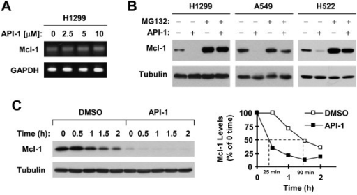 API-1 induces proteasome-mediated Mcl-1 degradation (B) and decreases Mcl-1 stability (C) without altering Mcl-1 mRNA levels (A). A, H1299 cells were exposed to the indicated concentrations of API-1 for 8 h. Total cellular RNA was then isolated from the cells for detection of Mcl-1 and GAPDH (internal control) mRNAs with RT-PCR. B, The indicated cell lines were pre-treated with 20 μM MG132 for 30 minutes prior to the addition of 5 μM API-1. After co-treatment for an additional 4 h, the cells were harvested for preparation of whole-cell protein lysates and subsequent Western blot analysis. C, H1299 cells were treated with 5 μM API-1 for 8 h. The cells were then washed with PBS 3 times and refed with fresh medium containing 10 μg/ml CHX. At the indicated times, the cells were harvested for preparation of whole-cell protein lysates and subsequent Western blot analysis. Protein levels were quantified with NIH Image J software (Bethesda, MA) and were normalized to actin. The results were plotted as the relative Mcl-1 levels compared to those at the time 0 of CHX treatment (right panel).