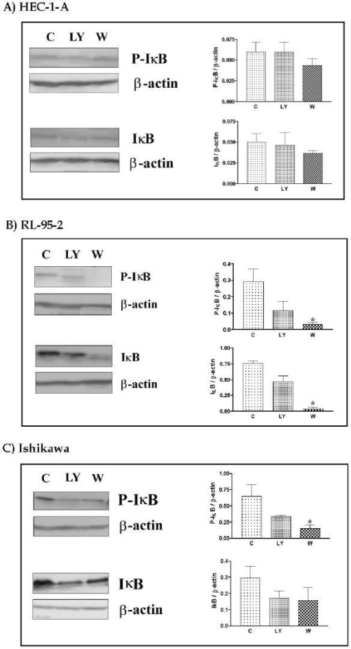 Effect of PI 3-K inhibitors on IκB expression and phosphorylation in HEC-1-A, RL-95-2 and Ishikawa cells. Western analysis was performed on cell protein lysates from pooled attached and floating cells. β-actin was used as control to correct for loading. Densitometric analyses were performed using BIO RAD gel doc system and are presented as a ratio (value/β-actin). 2 × 106 cells were plated for 24 h and cultured in medium in the presence or absence of LY294402 or Wortmannin. Data represent the mean ± SEM of 4 independent experiments. * p < 0.05 compared to control.