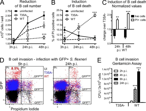 S. flexneri induces B cell death dependent on the T3SA in vitro. The human IgA+ CL-01 B cell line was infected for 30 min with WT or T3SA− bacteria before addition of gentamicin. (A) Count of in vitro–infected human CL-01 B cells over time. Asterisks indicate statistical difference to the uninfected control. (B) Percentages of in vitro–infected PI+ human CL-01 B cells over time. Asterisks indicate statistical difference to the uninfected control. (C) Fold changes of live cell number and percentage of PI+ cells are presented for WT infection over infection with the T3SA− mutant as normalized values. Asterisks indicate statistical difference to the T3SA− strain. (D) Flow cytometry analysis of cells infected with GFP-expressing bacteria. GFPhigh PI− B cells were detected 5 h p.i. with WT, but not T3SA− bacteria (P < 0.001), representing 8.47 ± 1.1% (mean ± SEM) invaded cells. At 24 h p.i., GFPhigh cells are PI+. (E) Invasion assay for CL-01 B cells. The number of CFUs per 3 × 105 infected cells is presented for WT and T3SA− bacteria at 2, 4, 6, and 24 h p.i. Three independent experiments were performed in triplicate for A–E and data are presented as mean ± SEM. Statistically significant differences were determined by two-way ANOVA with Bonferroni post-test. *, P < 0.05; **, P < 0.01; ***, P < 0.001.