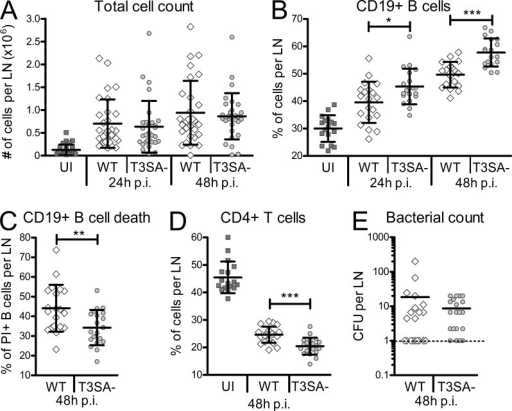 S. flexneri induces B cell death dependent on the T3SA in vivo. (A) Total cell count in murine LNs after footpad infection with S. flexneri. Cells were counted 24 and 48 h after WT and T3SA− infection. (B) Percentages of CD19+ B cells in murine popliteal LNs 24 and 48 h after footpad infection. (C) Percentages of PI+ CD19+ B cells in murine popliteal LNs 48 h after footpad infection. (D) Percentages of CD4+ T cells in murine popliteal LNs 48 h after footpad infection. (E) Number of CFUs for WT and T3SA− bacteria in murine LNs 48 h after footpad infection. Two independent experiments with each 5 mice per group (10 LNs) were performed and data are presented as mean ± SEM. Asterisks indicate statistical significant differences between WT and T3SA−, determined by Mann-Whitney Student's t test. *, P < 0.05; **, P < 0.01; ***, P < 0.001.