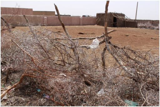 Showing an enclosure demarcated with Acacia tree branches to keep animals or hay.