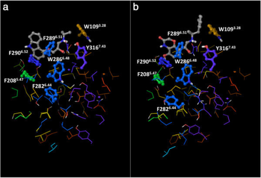 "View of the ""knot region"" of the β2AR, with the cluster of interconnected aromatic residues highlighted: a) the carazolol-bound inactive structure (2RH1); b) the active structure (3P0G). The residues that belong to the aromatic cluster are shown as balls and sticks, all the others are shown as thin tubes. The color of the carbon atoms reflects the sequence position of the residues and goes from red at the N-terminus to purple at the C-terminus, with TM1 in red/orange, TM2 in orange, TM3 in yellow, TM4 in yellow/green, TM5 in green, TM6 in blue and TM7 in purple. The ligands co-crystallized with the receptors are also shown as balls and sticks, with their carbon atoms colored in gray."