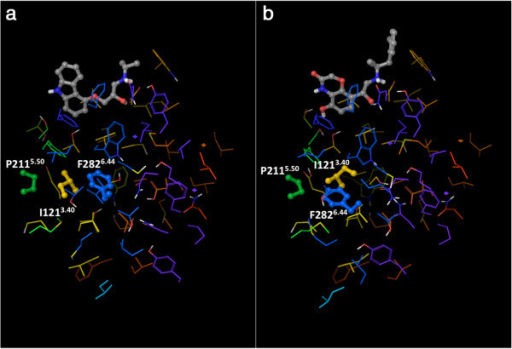 "View of the ""knot region"" of the β2AR, with the P-I-F motif highlighted: a) The carazolol-bound inactive structure (2RH1); b) the active structure (3P0G). The residues that belong to the P-I-F motif are shown as balls and sticks, all the others are shown as thin tubes. The color of the carbon atoms reflects the sequence position of the residues and goes from red at the N-terminus to purple at the C-terminus, with TM1 in red/orange, TM2 in orange, TM3 in yellow, TM4 in yellow/green, TM5 in green, TM6 in blue and TM7 in purple. The ligands co-crystallized with the receptors are also shown as balls and sticks, with their carbon atoms colored in gray."