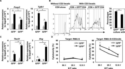 Type-I IFNs directly impact on T-cell functions in glioma-developing mice. (A) CD4+ cells from draining LN derived from glioma-developing tdTomato mice were sorted into GFP- or GFP+ cells and incubated with (black bars) or without (grey bars) anti-CD3mAb. After 4 h, total RNA was extracted for evaluation of Foxp3 and Tgfb1 mRNA levels by qRT-PCR. (B) CFSE-labeled WT CD8+ T-cells were co-cultured with GFP- or GFP+ CD4+ T-cells in the presence of CD3 beads. After 60 h, division of CFSE-labeled CD8+ T-cells gated by reactivity to PE-Cy7-condjugated anti-CD8mAb was evaluated by CFSE intensity. As a negative control, CFSE-labeled WT CD8+ T-cells were cultured without any stimulation (left panel). Histograms are representative of two independent experiments. The bar graph shows the percentage of CD8+ cells that have divided at least twice in each of two stimulation conditions (N = 4/group; *p < 0.05). (C) GFP- or GFP+ CD8+ T-cells were incubated with (black bar) or without (grey bar) anti-CD3mAb. After 4 h, total RNA was extracted for evaluation of Tbx21 and Ifng mRNA expression levels by qRT-PCR (U: undetected). (D) Cytotoxic activity of GFP- and GFP+ CD8+ T-cells was evaluated by 51Cr-release assay. RMA-S cells untreated (left panel) or pretreated (right panel) with anti-CD3mAb (10 g/mL) were used as target cells. *p < 0.05 compared at the same E/T ratio.