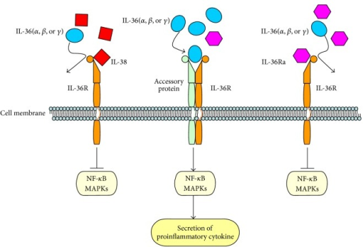 Receptor and signaling pathway of IL-38.