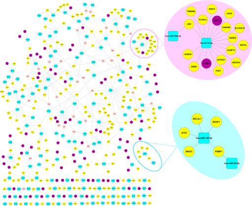 Dosage sensitivity regulation network in breast cancer.Blue rounded rectangle nodes denote for miRNA, yellow nodes denote for amplified genes, purple nodes denote for deleted genes, pink nodes denote for the genes which are amplified in some samples, and deleted in the other samples.