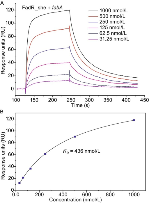 SPR-based dynamic analyses for binding offabAtoShewanellaFadR. (A) SPR assay for interaction between fabA and FadR_she. (B) Measurement of the KD value for fabA-FadR_she