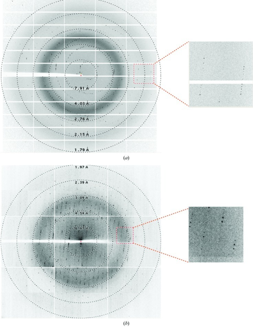 Diffraction patterns of SghA (a) and SghR (b). The right panel is a magnification of the boxed region. The resolution rings were generated using ADXV (http://www.scripps.edu/~arvai/adxv.html).