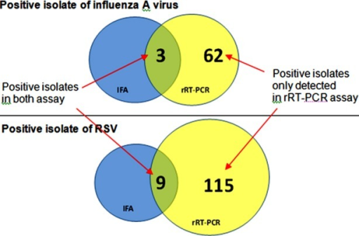 Number of positive isolates of influenza A virus and RSV detected by cell culture and Immunofluorescence Assay and rRT-PCR.