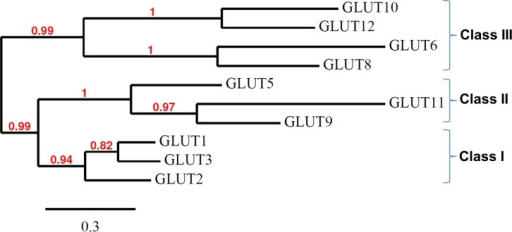 Phylogenetic tree of multiple alignments of all known chicken GLUT protein sequences.The analysis of chicken GLUTs was performed on the Phylogeny.fr platform (http://www.phylogeny.fr; [20, 21]) using Ensembl protein IDs. The tree was constructed as described in Materials and Methods. Reliability of internal branches was assessed using the aLRT test. The scale represents the substitution rate.