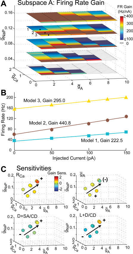 "Sensitivity of Firing Rate Gain Across Conductance Space(A) Firing rate gain for models within subspace A, according to the colorscale at top right. Uncolored cells did not fire under any of the injected currents. Gain sometimes varied nonmonotonically with 								; compare models labeled 1, 2, and 3.							(B) Firing rate versus injected current with fitted gain slopes for Models 1, 2, and 3 shown in (A). Models with low 								 had high spontaneous firing rates but intermediate gain (Model 3, yellow triangles); gain increased for intermediate 								 (Model 2, dark red circles), then decreased for high 								 (Model 1, blue squares).							(C) Sensitivity of firing rate gain to active parameters RCa and 								 (top left and right) and constant density morphologic perturbations D + SA / CD and L + D / CD (bottom left and right) according to the colorscale at top left, for candidate models within subspace A. Arrows indicate the principal direction of global sensitivity trends across the space, which were similar for perturbations of active and morphologic parameters. The sign of sensitivity (marked by ""+"" and ""−"") often changed along this principal direction."