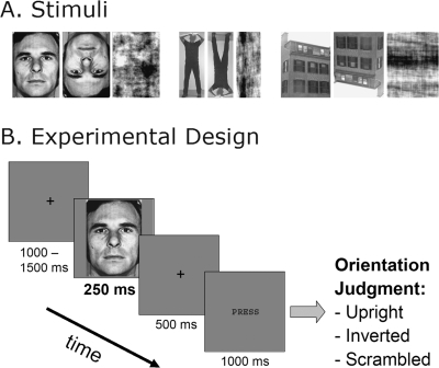 Examples of Stimuli and Experimental Trial.A. Examples of the nine stimulus conditions. Photographs of Faces, Bodies and Houses were presented in three different ways: Upright, Inverted, and after phase-Scrambling. B. Example of an experimental trial. Stimuli were presented for 250-ms in random order, and after a delay of 500-ms subjects had to judge by button press whether the pictures were Upright, Inverted, or Scrambled.