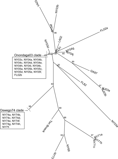 Phylogenetic tree of NSP3 coding region of subset of lineage I eastern equine encephalitis virus strains, unrooted neighbor-joining analysis.