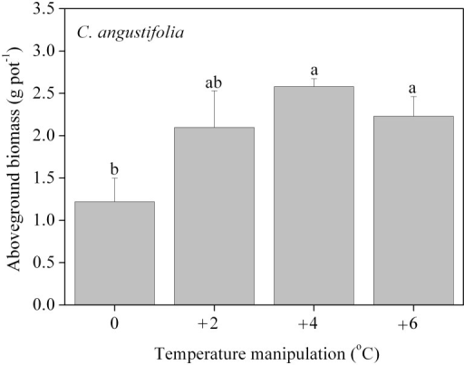 Aboveground biomass of C. angustifolia after secondary growth for one month.Different letters shared by the bars indicate significant differences (p<0.05) between the temperature manipulations. The error bars represent means ± 1 standard error.