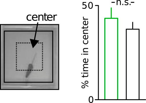 Unaltered anxiety of Disc1 mice.Unaltered anxiety in Disc1 mice quantified from the time spent in the center of the open field (n = 19, 18). Data are mean ± SEM.DOI:http://dx.doi.org/10.7554/eLife.04979.006