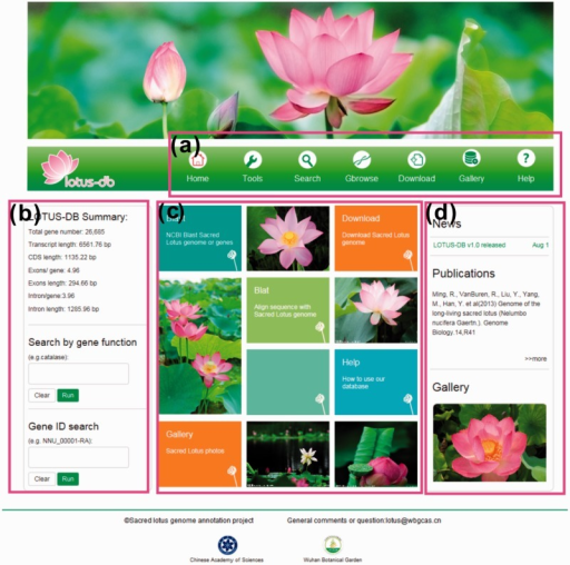 The interface of LOTUS-DB. (a) The navigation toolbar contains the main icons for the function of the website. (b) The sequences retrieval and genes search area. (c) Frequently used tools. (d) News, publications and gallery photos show.