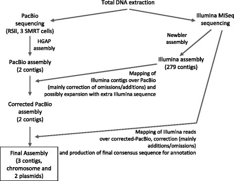 Sequencing and assembly pipeline. The sequencing and assembly pipeline followed in this work (data specific to this project are shown in brackets) and suggested as strategy for actinomycete genome sequencing