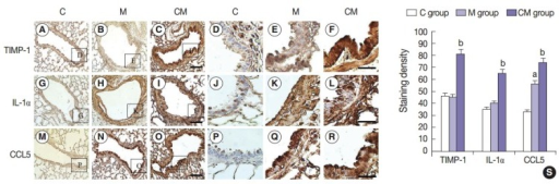 Localization of IL-1α, CCL5, and TIMP-1-immunoreactive cells in the lung tissues at 28 days. (A–R) Immunohistochemical expression reveals that the positive cells of IL-1α, CCL5, and TIMP-1 are significantly higher in the CM group than that in the C and M groups, and they are higher in the M group than that in the C group. (S) The increased levels of IL-1α, CCL5, and TIMP-1 immunoreactivity observed in the CM group are statistically significant. The levels of IL-1α, CCL5, and TIMP-1 immunoreactivity are significantly decreased in the CM group compared with the C and M groups. Panels A–C, G–I, and M–O are high power views of panels D–F, J–L, and P–R, respectively. C, control; M, monocrotaline; CM, hUCB-MSCs-CM; hUCB-MSCs-CM, conditioned medium from human umbilical-cord blood derived mesenchymal cells; TIMP-1, tissue inhibitor of metalloproteinase 1; IL-1α, interleukin 1α; CCL5, chemokine (C-C motif) ligand 5. ap<.05 compared with the C group; bp<.05 compared with the M group.