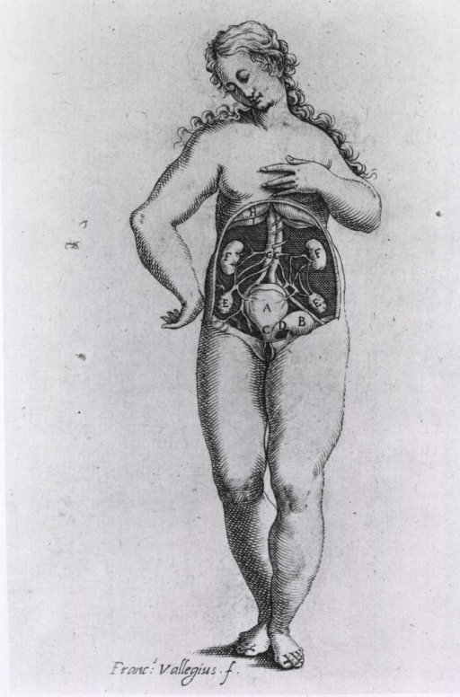 <p>Nude female figure standing, full length with anatomical view of abdominal cavity and urogenital system.</p>