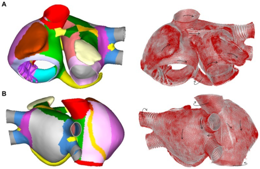 Fiber orientation in the model.Frontal (A) and dorsal (B) views of the model. The model was divided into 42 areas (represented with different colors) according to the orientation of the muscle bundles (left) and fiber orientation (see black arrows) assigned to the main areas (right).