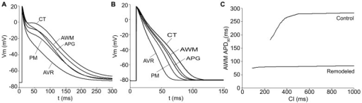 AP for different atrial areas and APD90 restitution curve for AWM under physiological and remodeling conditions.AP time courses for the considered atrial cellular models (CT, PM, APG, AVR and AWM) under physiological (A) and remodeling conditions (B). APD90 restitution curve for AWM under physiological (control) and remodeling conditions (C).