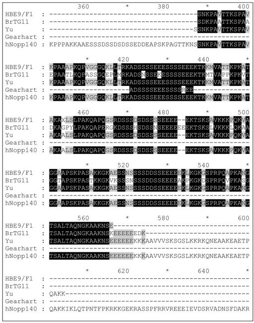 Alignment of the C-terminal domain (aa 350–650 of 699) of hNopp140 (Swiss-Prot: Q14978) with clones rescued from human brain (HB) and human breast tumour (BrT) cDNA libraries using palau'amine immobilised on PS microtitre plate wells. Similar clones isolated from T7 phage-displayed libraries by Yu et al. [63] (using biotinylated doxorubicin immobilised on a streptavidin-coated plate) and Gearhart et al. [64] (using 2-methylnorharman adsorbed to nitrocellulose discs) are also shown. Black shading = 80% homology; Grey shading = 60% homology.