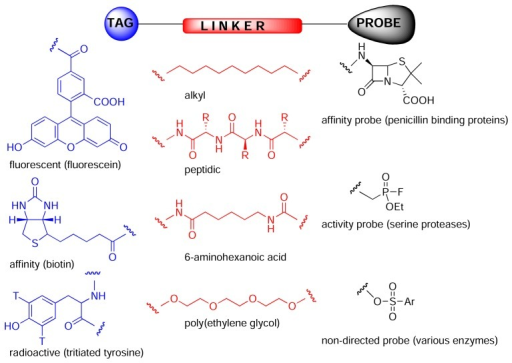 Chemical proteomics probes [5] are composed of a tag (or anchor such as polystyrene), a linker (spacer) and probe or reactive group. The probe can be a drug, natural product, peptide, reactive group or anything and can react covalently or non-covalently with its biological receptor, which can have more or less specificity for the probe or react with a specific type of enzyme.