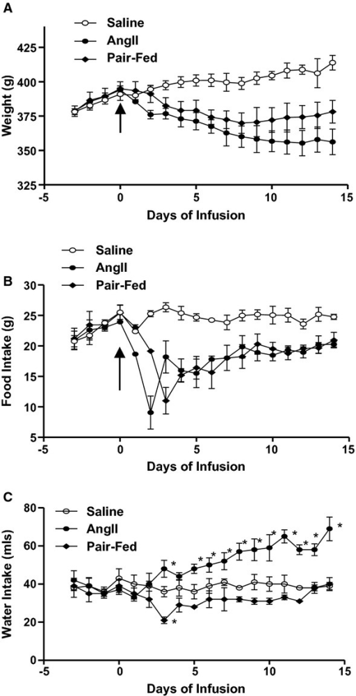 Pair feeding demonstrates that reductions in food intake partially mediate body weight reductions of angiotensin II (AngII)-infused rats. Rats were administered saline, AngII (400 ng/kg per minute) or were pair-fed to food intake of AngII-infused rats for 14 days. Body weight (A), food intake (B), and water intake (C) of rats in each group. Data are mean ± SEM from n = 15 rats/group. *Denotes significantly different from saline-infused rats (P < 0.05).