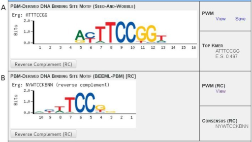 Seed-and-Wobble and BEEML-PBM motif displays. Examples of displays for data generated using the (A) Seed-and-Wobble and (B) BEEML-PBM algorithms for the Erg protein, from Wei et al., 2010 (31). (A) The Seed-and-Wobble data displays a sequence logo, links for downloading the PWM data and the top-scoring k-mer along with its PBM enrichment score. (B) The BEEML-PBM data display format is essentially the same, but because k-mers and enrichment scores are not utilized in this algorithm, an IUPAC consensus sequence derived from the PWM is instead displayed above the motif. The reverse complement sequence orientation can be displayed for either data set individually by clicking the appropriate button; this changes the logo, the PWM file link and the displayed sequence. Assignment of 'forward' versus 'reverse complement' orientation is arbitrary for each PWM—here, the BEEML-PBM data have been switched to 'reverse complement' mode in order to display a more obvious comparison between the logos, since its 'forward' orientation happens to correspond more closely to the Seed-and-Wobble data's 'reverse complement' orientation.