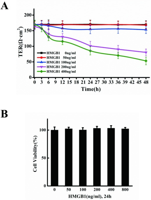 HMGB1 increases endothelial cell permeability.A. HMGB1-induced TEER decrease. EA.hy926 cells cultured on transwell filters were incubated for 3, 6, 12, 24, 36 and 48h, respectively, with or without 50, 100, 200 and 400 ng/ml HMGB1. The integrity of the tight junctions was assessed by measuring the TER. B. Cell viability in the cells treated by HMGB1. EA.hy926 cells were treated with 50, 100, 200, 400 and 800ng/ml HMGB1, respectively, for 24 h. The cell viability was measured by CCK-8 assay. Data are presented as mean ± SD of three independent experiments. *Indicates significant difference compared with the control group (P<0.05).