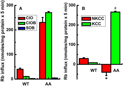 Constitutive KCC3 Thr991/Thr1048 dephosphorylation stimulates KCC3 activity and is accompanied by a reversal of NKCC1 activity. Rb+ influx assays in isogenic cell lines harboring doxycycline-inducible expression of either KCC3 wild type (WT) or non-phosphorylatable KCC3 Thr991A/Thr1048A (AA) were performed as described in Methods. (A) Rb+ influx was assessed in the following media: Cl− + 0.1 mM ouabain (ClO, red), Cl− + (ouabain + 10 μM bumetanide) (ClOB, green), S + (ouabain + bumetanide) (SOB, blue) after induction of the indicated proteins (see Methods for details). (B) Calculated Rb+ flux through NKCC and KCC as the Cl-dependent, ouabain-insensitive, bumetanide-sensitive Rb+ influx (ClO - ClOB), and Cl-dependent, ouabain and bumetanide-insensitive Rb+ influx (ClOB - SOB), respectively. Calculation of NKCC in AA cells after induction resulted in a negative value due to a larger Rb+ influx in ClOB than in ClO, i.e., CLO – CLOB = -NKCC (see Results and Discussion for further details). Flux time, 5 min; n = 9 individual determinations for WT cells and n = 4 individual determinations for AA cells. Total number of independent experiments N = 4 for WT and N = 5 for AA cells. Results were similar among different cell clones for both WT and AA. *p < 0.005; #p < 0.0005; data represent the mean ± SEM values. Two-sample t-test was employed to determine the statistical significance of the differences between WT and AA, as indicated.