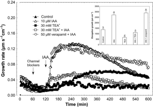 Effect of K+ and Ca2+ channel blockers (TEA-Cl and verapamil, respectively) on the IAA-induced growth rate (μm s−1 cm−1) of maize coleoptile segments. Coleoptile segments were first preincubated for over 1 h in a control medium, whereupon channel blockers were added. At 2 h, IAA was added to the incubation medium, at a final concentration of 10 µM. Inset on the right shows the total elongation growth, presented in a bar graph, calculated as the sum of extensions between 120 and 600 min of the experiment. Values are the mean of at least nine independent experiments. Bars indicate mean ± SE. Mean values followed by the same letter are not significantly different from each other according to the LSD test (P < 0.05).