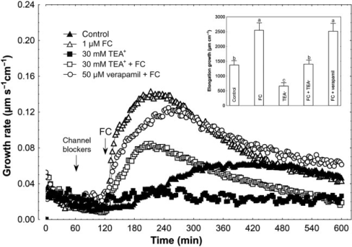 Effect of K+ and Ca2+ channel blockers (TEA-Cl and verapamil, respectively) on the FC-induced growth rate (μm s−1 cm−1) of maize coleoptile segments. Coleoptile segments were first preincubated for over 1 h in a control medium, whereupon channel blockers were added. At 2 h, FC was added to the incubation medium, at a final concentration of 1 µM. Inset on the right shows the total elongation growth, presented in a bar graph, calculated as the sum of extensions between 120 and 600 min of the experiment. Values are the mean of at least nine independent experiments. Bars indicate mean ± SE. Mean values followed by the same letter are not significantly different from each other according to the LSD test (P < 0.05).