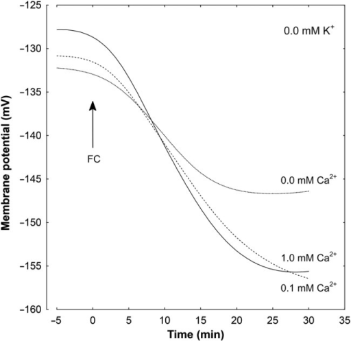 Effect of different concentrations of Ca2+ ions on the FC-induced changes in the Em measured in maize coleoptile parenchymal cells in a medium without K+. Coleoptile segments were incubated in the indicated medium (the same as in growth experiments) for 110 min; afterwards a single segment was transferred into an electrophysiological chamber containing the same medium. Measurements of membrane potential (30 min) were carried out after insertion of a microelectrode into the cell (one cell per one segment) and stabilization of the Em (<10 min) at 2 h (0 min). Fusicoccin, at a final concentration of 1 µM, was added after 2 h of segment preincubation in the indicated medium; for the last 10 min, coleoptile segments were incubated in the electrophysiological chamber. Representative curves are shown. These curves were fitted with least-squares linear regression and subsequently smoothed using Statistica software for Windows (Version 8.0).