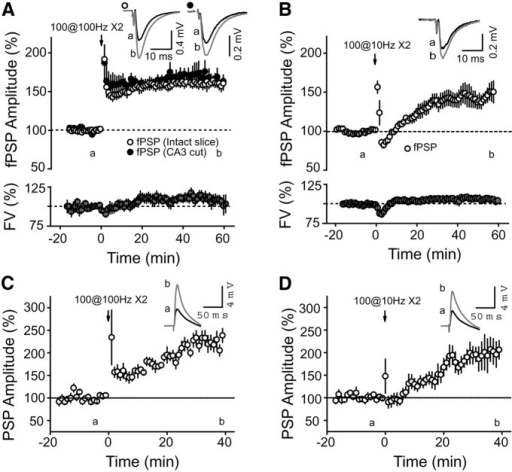 HFS and 10 Hz stimulation induce a long-term increase of SC–CA2 PSP amplitude. A–D, Time course of the average normalized PSP amplitude obtained by extracellular recording (A, B) in CA2 SR or whole-cell current-clamp recording (C, D) of CA2 PNs, in response to SC stimulation. Both an HFS protocol (two sets of 100 pulses at 100 Hz; A: p < 0.00001, n = 10; C: p = 0.00018, n = 9) and a 10 Hz protocol (two sets of 100 pulses at 10 Hz; B: p = 0.0009, n = 8; D: p = 0.01596, n = 6) induce a long-term increase in the SC PSP amplitude in CA2. The fiber volley (FV; a measure of the number of axons firing an action potential) was not significantly increased after HFS (A; p = 0.06) or 10 Hz stimulation (B; p = 0.19). A also shows that making a cut between CA3 and CA2 does not affect the magnitude of the potentiation evoked by HFS (p = 0.59 with uncut slices, n = 5). Top right-hand corner in all panels, Averaged PSP traces of a representative experiment corresponding to time points before (a) and 60 min after (b; A, B) or 40 min after (b; C, D) the stimulation protocol. Error bars indicate the SEM in all panels.