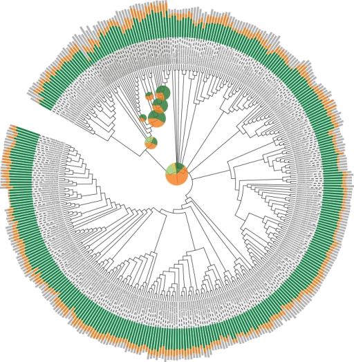 Statistics on the content of the eggNOG database. The eggNOG assignments for 373 complete genomes [19] were mapped onto the tree of life. The stacked bar charts outside the tree show the proportion of genes from each genome that can be assigned to a functionally annotated orthologous group (green), to an unannotated orthologous group (orange) or to no orthologous group (grey). The length of each bar is proportional to the logarithm of the number of genes in the respective genome. The pie charts inside the tree show the fractions of orthologous groups at each level in the hierarchy that could be annotated with a function description (green for NOGs, light green for extended COGs and KOGs) and that could not be functionally annotated (orange for NOGs, light orange for extended COGs and KOGs). The areas of the pie charts are proportional to the number of orthologous groups at the phylogenetic level in question. This figure was made using iTOL [20].