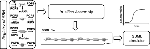 Diagram showing how to build a synthetic network by assembling different model parts from a library