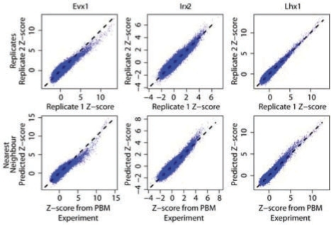 Comparison of the accuracy of NN predictions versus experimental replicates. Scatterplots show the measured Z-scores for all 32 896 non-redundant eight-base DNA sequences from one PBM versus a second PBM for the same DBD (top) or versus the Z-score predicted using NN (6AA variant; bottom). Median performance metrics are given. Evx1 has a single NN (Hoxa2); Irx2 has a single NN (Irx3); Lhx1 has two NN (Alx3 and Lhx3).