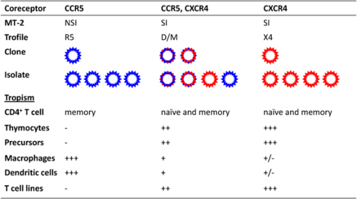 Overview of coreceptor use and cell tropism of different HIV-1 variants. Individual viral isolates are classified based on their ability to use CCR5 (R5 variants), CXCR4 (X4 variants) or both coreceptors (R5X4 variants). Bulk viral isolates capable of using both coreceptors are designated dual/mixed (D/M) as their quasispecies may contain any mixture of the various phenotypic variants. The cell tropism of each viral isolate is determined by the expression levels of CCR5 and CXCR4 on the various target cells.
