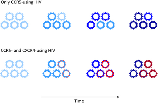 Evolution of HIV-1 coreceptor usage during the progression of the disease. In most individuals HIV-1 infection is initially sustained by CCR5-using variants (R5, blue). In ~50% of the patients infected with subtype-B HIV-1, the CCR5-using variants acquire the ability to use CXCR4 (R5X4, blue/red) prior to AIDS diagnosis. Subsequently, these dual-tropic R5X4 variants may lose their ability to use CCR5 (X4 variants, red). Over time, viral coreceptor usage evolves resulting in viral variants with increased affinity for their respective coreceptor (increased color intensity).