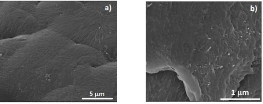 SEM images for the PVDF@ CNTox400 composites (for 0.2% CNTox400): (a) surface image showing the spherulitic microstructure of the polymer and (b) fracture image showing the dispersion of the CNT into the bulk of the polymeric matrix.
