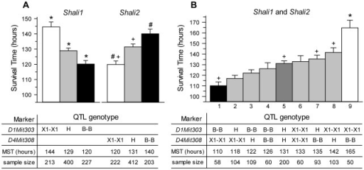 Mean survival times of mice grouped by genotypes at markers with peak LOD scores for Shali1 and Shali2.The F2 population (n=840) generated from sensitive B and resistant X1 mice [25] was sorted into groups based on their genotypes (X1-X1, H, or B-B) at the peak MIT marker representing Shali1 (D1Mit303; 1–303) or Shali2 (D4Mit308; 4–308) (panel A) or at both peak markers (panel B). Survival times of mice for each genotype group was determined and plotted as the mean (MST) ± SEM. Groups that differed from each other are marked with the same symbol. Panel A shows a near mirror image of the genotype bar plots, indicative of the reciprocal allelic effects of Shali1 and Shali2. For Shali1 (D1Mit303), F2 mice for all three genotype groups differed from each other (indicated by *). For Shali2 (D4Mit308), F2 mice homozygous for X1 alleles differed from mice H or B-B (+), and mice B-B differed from those X1-X1 (#). Panel B shows a gradation of effect for the 9 different pairwise genotypes, with the polar extremes for MSTs (i.e., bars 1 vs. 9) occurring with the B-B, X1-X1 (high sensitivity) and X1-X1, B-B (high resistance) reciprocal genotypes at Shali1 and Shali2, respectively. Moving inward from each end gives group comparisons for each reciprocal genotype pair (i.e., bars 2 vs. 8, bars 3 vs. 7 and bars 4 vs. 6). The group of mice heterozygous for both markers fell in the center (bar 5), with a MST intermediate to all other groups. n, represents the number of F2 mice successfully genotyped for each (or both) MIT marker(s). F2 mice with genotype 9 (i.e., X1-X1, B-B at D1Mit303 and D4Mit308, respectively) were the most resistant and differed from all other genotypes (indicated by *). F2 mice with the reciprocal B-B, X1-X1 genotype were the most sensitive and, besides differing from genotype 9, also differed from genotypes 5, 7, and 8 (+).