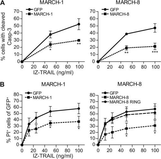 MARCH overexpression inhibits apoptosis induction by TRAIL.A, MCF-7Casp-3 cells were transfected to express either GFP only, or GFP-tagged MARCH-1, or -8. At 24 h after transfection, cells were stimulated with IZ-TRAIL for 5 h and caspase-3 cleavage was determined by flow cytometry in the GFP positive cell populations. B, as in A, with the following adaptations. Cells were transfected with WT MARCH-1 or -8, or with the MARCH-8 RING mutant described in the legend to Fig. 2. Cells were stimulated with TRAIL for 14 h, and cell death was read out by propidium iodide (PI) uptake. Data in A and B represent mean ± S.D. of values from 3 to 4 independent experiments. The percentage of cells with cleaved caspase-3 or PI uptake in the untreated control samples was subtracted. Asterisks indicate statistically significant differences between MARCH.GFP-transfected and GFP only-transfected control cells at the indicated concentration of TRAIL (Student's t test; *, p < 0.05; **, p < 0.01; ***, p < 0.001).