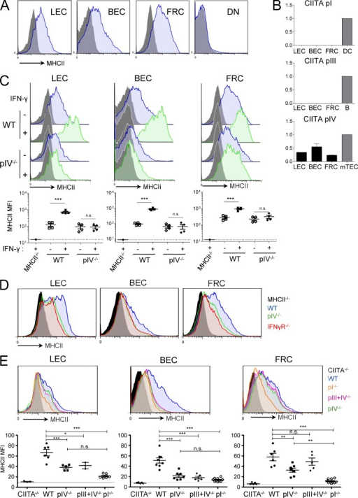 CIITA pIV controls IFN-γ–mediated up-regulation, but not steady-state expression of MHCII by LNSCs. (A) LNSCs were defined by FACS as follows: LEC, CD45− CD31+ gp38+; BEC, CD45− CD31+ gp38−; FRC, CD45− CD31− gp38+; DN, CD45− CD31− gp38−. Histograms show MHCII expression levels by each LNSC population (gray histograms, isotype control). Data are representative of 4 independent experiments with at least 3 mice each. (B) Ciita promoters pI, pIII, and pIV mRNA levels were quantified by qPCR from FACS-sorted LEC, BEC, or FRC. Indicated control cells (gray bars) were used as reference. Data are representative of 3 independent experiments, with a pool of 10 mice each. (C) Mice were injected subcutaneously (green) or not (blue) with IFN-γ and draining LNs were collected 24 h later. Histograms show MHCII expression levels on LEC, BEC, and FRC. Graphs depict MHCII MFI where each symbol represents individual mouse. Data are representative of 3 independent experiments, with 4 mice per group. ***, P < 0.001, n.s. = not significant. Error bars depict mean ± SEM. (D and E) Histograms show MHCII expression levels on LEC, BEC, and FRC from indicated mice. Histograms are representative of at least 2 independent experiments with 2–3 mice per group. (E) Graphs depict MHCII MFI where each symbol represents individual mouse. Data are pooled from 3 independent experiments with 2–3 mice per group. *, P < 0.05; **, P < 0.01; ***, P < 0.001; n.s. = not significant. Error bars depict mean ± SEM.