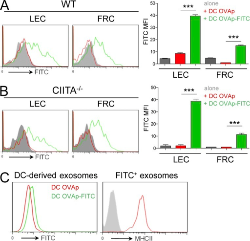 DCs transfer pMHCII complexes to LEC and FRC in vitro. (A and B) WT (A) and CIITA−/− (B) LEC/FRC were co-cultured with BM-DCs preloaded with OVA323-339 (red histograms) or FITC-labeled OVA323-339 (green histograms). After 24 h, FITC signals was analyzed by FACS in LECs and FRCs and compared with isotype control (gray histogram). Graphs show FITC MFI and are representative of 3 independent experiments. Error bars depict mean ± SEM. ***, P < 0.001. (C) Exosomes were purified from supernatant of 5 × 106 BMDCs loaded with FITC-labeled (green) or unlabeled (red) OVA peptide (1 µM). DC-derived exosomes were coupled with latex beads and analyzed by FACS for FITC fluorescence (left) and for MHCII expression (compared with isotype control in gray) after gating on FITC+ exosomes (right). Data representative of 3 independent experiments.