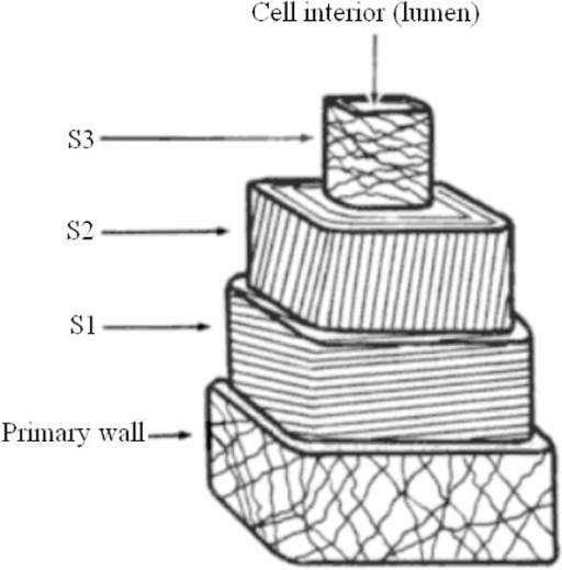 Diagram of a typical textile bast fibre cell showing the fibrillar orientations of the sublayers. S2 is here shown with Z-twist. Edited from Burgess (1985).