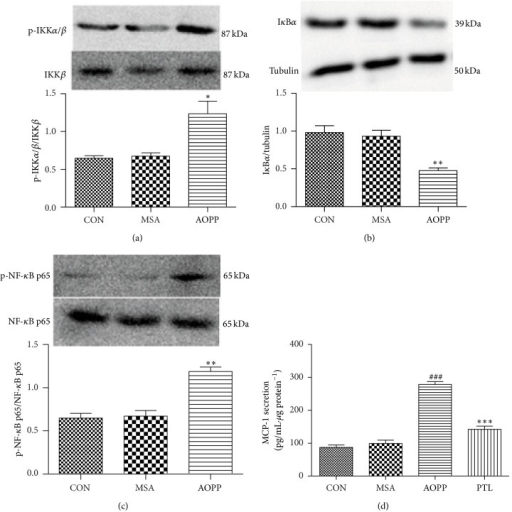 AOPP-increased MCP-1 expression in podocytes was mainly mediated by the IKK/NF-κB pathway. The overnight serum-deprived podocytes were treated with 200 μg/mL AOPPs for 30 min. The expression of p-IKKα/β, p-NF-κB p65, and IκBα was examined by Western blotting (a, b, and c). To verify the role of the IKK/NF-κB pathway involved in the AOPP-induced MCP-1 expression, protein levels of MCP-1 were determined by ELISA using cell supernatants exposed to AOPPs for 24 h in the presence of the IKK/NF-κB inhibitor PTL (d). Data are expressed as the means ± SEM of three independent experiments. ANOVA, (a, b, and c) *P < 0.05, **P < 0.01 versus CON. (d) ###P < 0.001 versus CON, ***P < 0.001 versus AOPP. CON, untreated cells; MSA, mouse serum albumin.