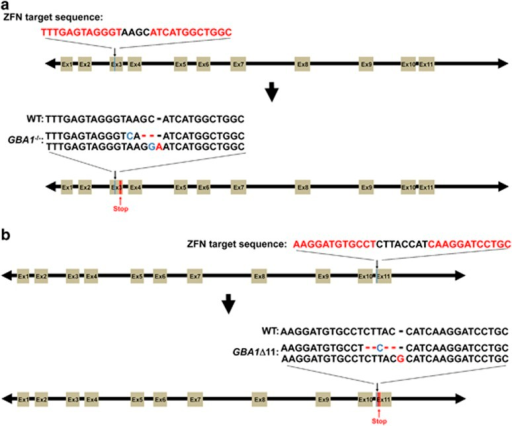 Generation of frame-shift mutations in GTP-binding prot | Open-i