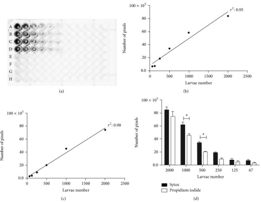 Analysis of viability using fluorimetric markers. (a) Microplate with serial dilution of C. elegans L3 (first point 2,000 to 62). Rows A–D dead larvae; E–H represent viable (control) larvae. Correlation between the number of dead larvae with 50% methanol and the fluorescence intensity of the pixels with Sytox (b) and propidium Iodide (c). Comparison of densitometry (number of pixels) between Sytox and propidium iodide markers (d). Significant differences (P < 0.05) were only detected when 1000 and 500 larvae were tested.